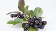 How to Make Homemade Chokecherry Wine