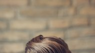 How to Grease Your Hair With Pomade Like a 1950s Greaser