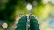 cactus on fresh garden
