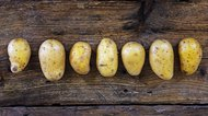 Young potatoes in a row on a dark rustic wooden