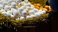 How to Extract Hyaluronic Acid From Eggs