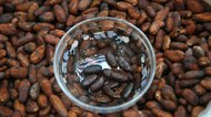 Storage & Shelf Life of Raw Cacao Beans