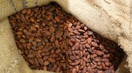 How to Roast Cacao Beans