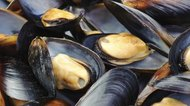 How Long Do Mussels Stay Fresh?