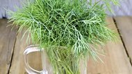 Substitutes for Dill