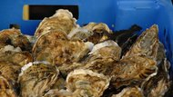 How to Steam Oysters in the Oven