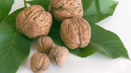How to Tell If Walnuts Have Gone Bad