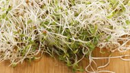 How to Clean Alfalfa Sprouts
