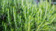 How to Crush Rosemary