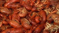 How to Store Live Crawfish