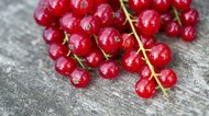 What Is a Currant Fruit?