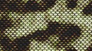 How to Care for Python Snakeskin Handbags