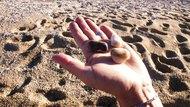 Pebble Balance of nature