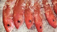 How to Scale a Red Snapper