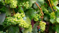 List of Riesling White Wine Brands