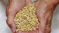 Handful of grain