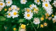 5 Ways to Naturally Relieve Allergies