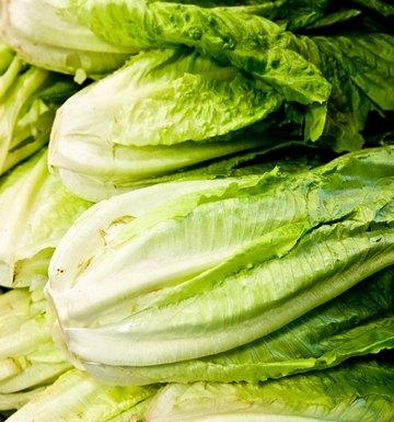 Can You Make Pickled Lettuce?