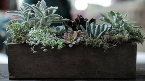 Succulent & Flower Arrangement