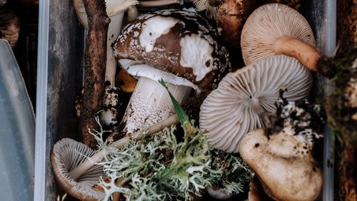 Everything You Want To Know About Functional Mushrooms
