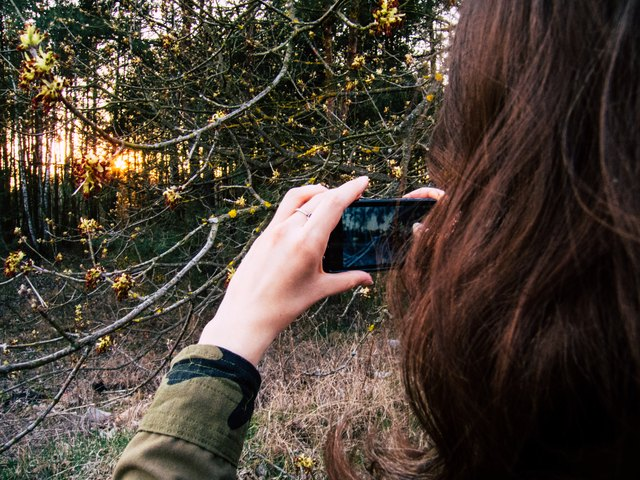Young woman taking a picture of an old flowering tree with her smartphone at sunset.