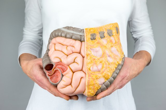Woman holding model of large intestine
