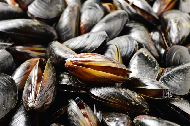 can you freeze live mussels