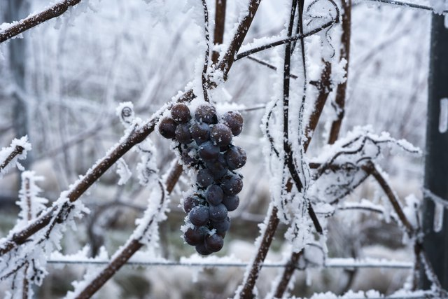how to drink ice wine