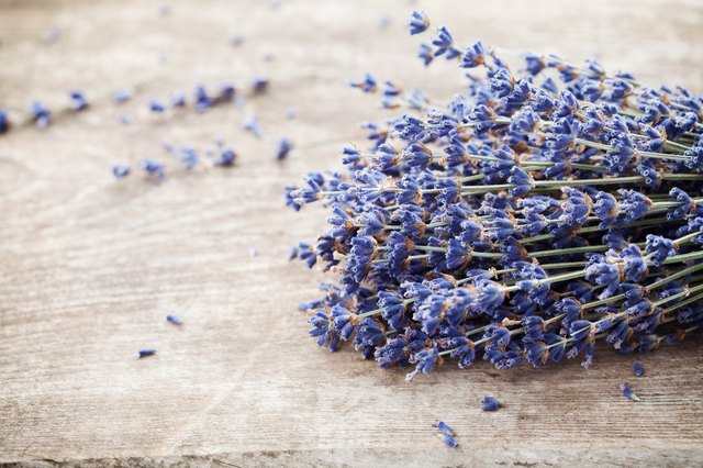 Dry lavender heap on vintage wooden table. Rustic style.