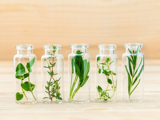 The bottle of essential oil with herbs rosemary, oregano, sage,