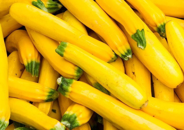 Fresh yellow squash on display at the farmers market
