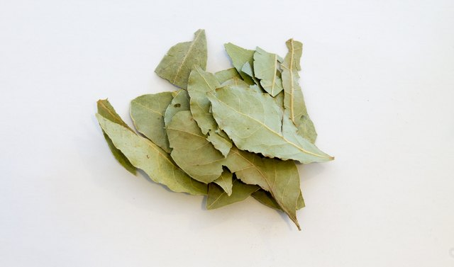 Dried Bay Leaves, isolated on white