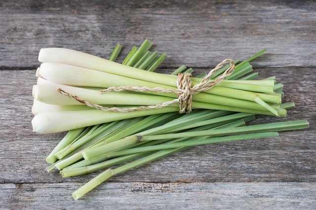 Fresh lemongrass (citronella) on wooden background - Spice for h