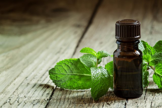 Essential oil of peppermint in a small brown bottle