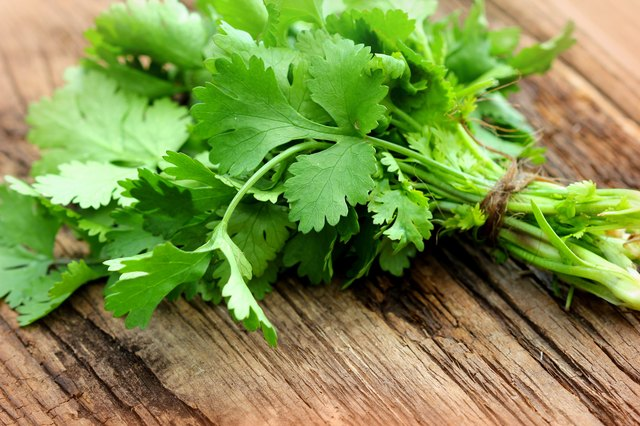Bunch of fresh cilantro on a wooden table
