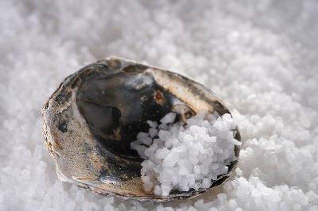 sea salt in sea shell on salts background