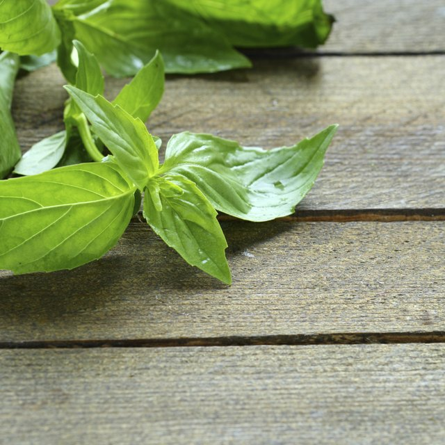 fresh lemon basil on the table