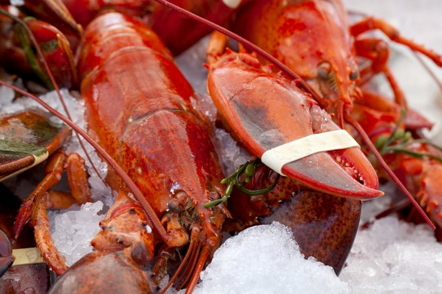 Lobsters on Ice