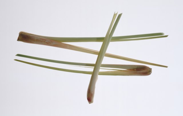 Lemon grass on white background, close-up