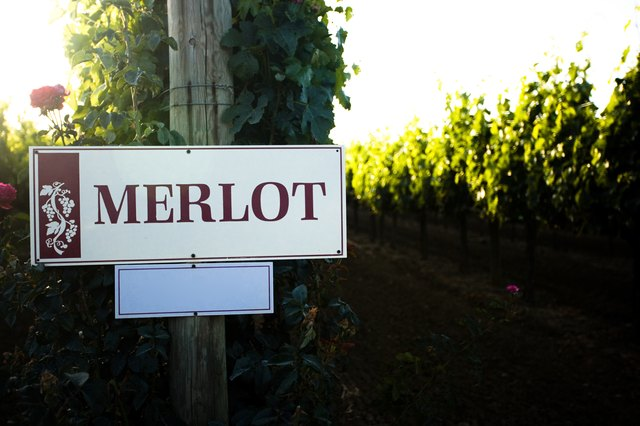 Merlot sign at vineyard, Sonoma Valley, California