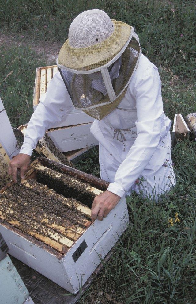 Beekeeper tending a beehive