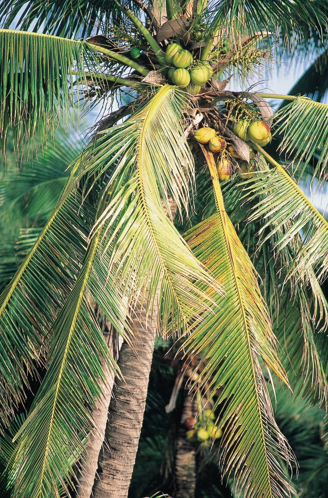 how to make a palm tree grow faster