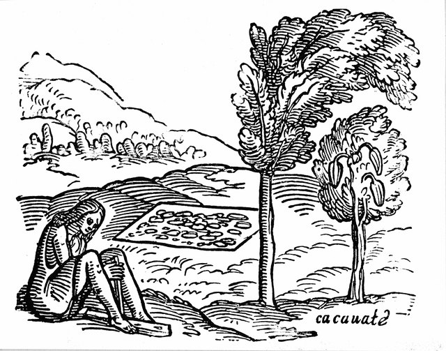 Woodcut of person and cocoa trees