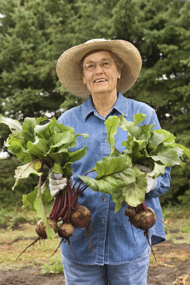 Woman with turnips in garden