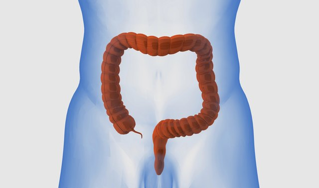 Red colon on the white background