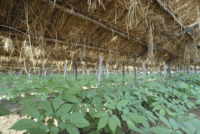Ginseng farm, South Korea