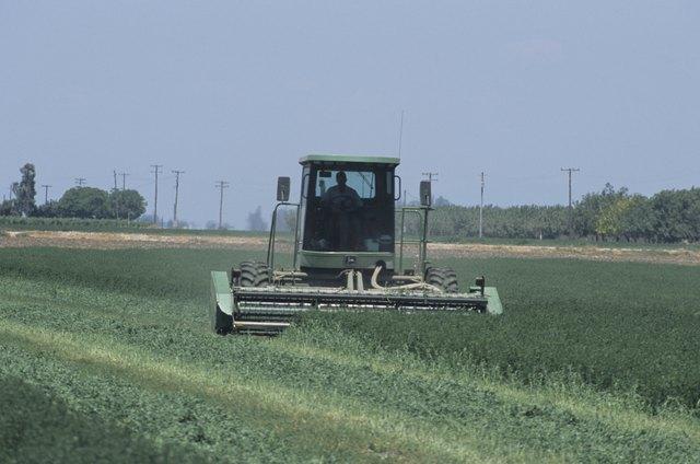 Mowing alfalfa