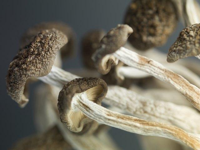 concept detailed image showing delicate enoki mushrooms