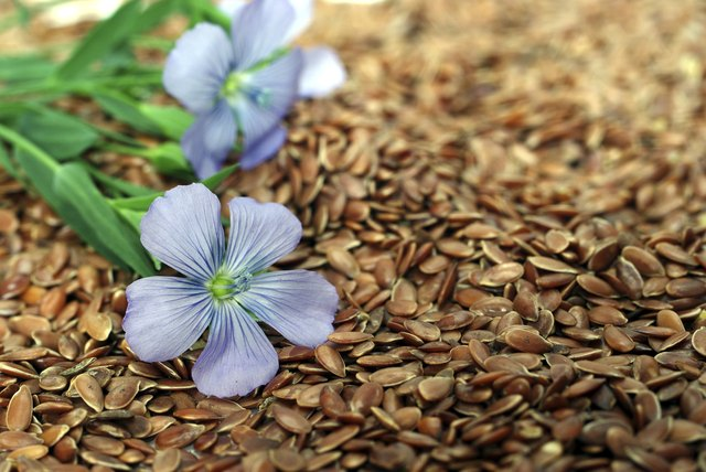 flax from blue flowers on seeds
